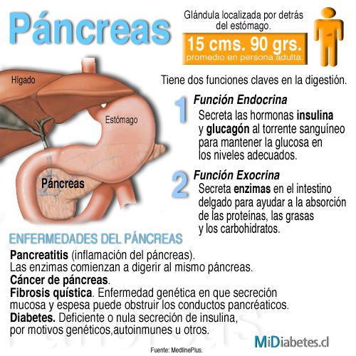 diabetes a bordo:: el páncreas, mucho más que un fabricante de insulina